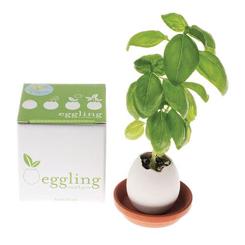 eggling gadget ecosostenibili